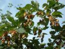 View The Local Flora & Fauna Album