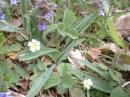 Flowers on banks:  Strawberry & Ground Ivy