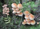 Fungus-3
