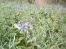 Flowers in the woods: